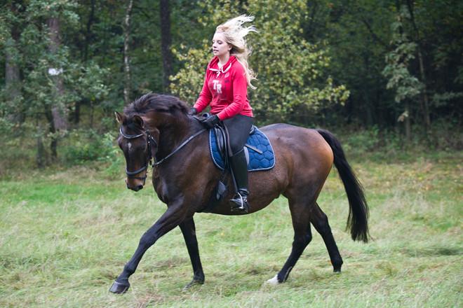 Pferdemuseum Verden Foto-Workshop Herbst 2013