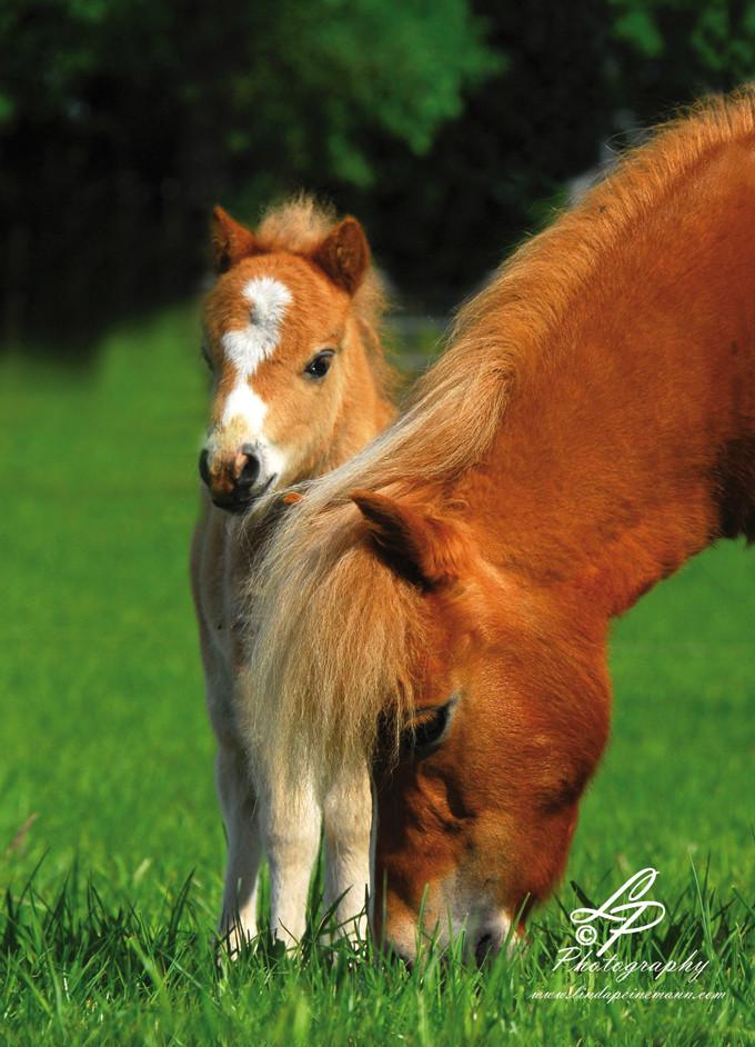 Pferdefotografie - Linda Peinemann