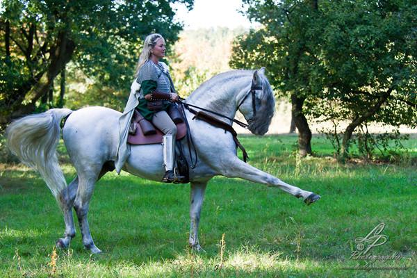 """Spansicher Schritt - Astrid Engelbart"""" Pferdefotografie - Pferdemuseum Verden 09/2014 Leitung & Fotografie Linda Peinemann"""