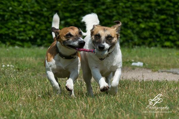 """Hunde & Pferdefotografie fürAnfänger/innen - Pferdemuseum Verden Mai 2014 - """"Sam & Lucy"""""""