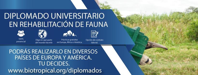 El Diplomado se puede realizar completo en diferentes países de América, como Ecuador, México o Perú y en Europa, en España. O bien alternar un módulo en un continente y las prácticas en otro.