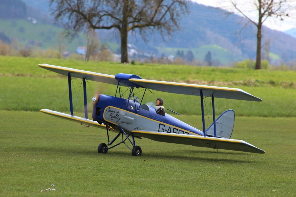 Stephans Tiger Moth