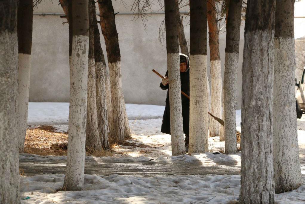 """Женщина подметает между деревьями в городе Ахалкалаки, в центральной Грузии. Многие стволы деревьев здесь окрашивают в белый цвет, чтобы предотвратить """"солнечные ожоги"""". Солнце нагревает деревья днем, а ночью они замерзают"""