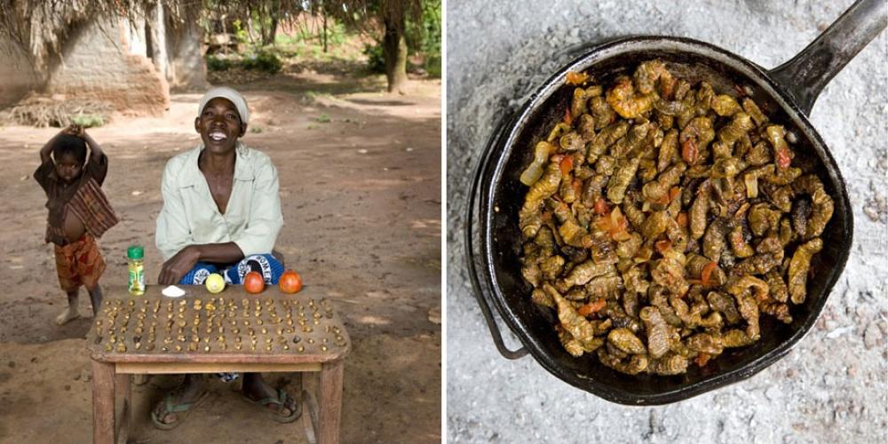 Малави. Блюдо: финкубала (гусеницы, обжаренные с помидорами).