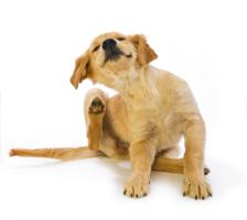 Allergie Überempfindlichkeit Füttermittelallergie Nahrungsmittelallergie Futterberatung Hausstaubmilben Allergische Asthma Juckreiz Darmentzündung Allrgostop Vitorgan Eigenbluttherapie Tier Hund Katze Gegensensibilisierung Desensibilisierung Futtermilben