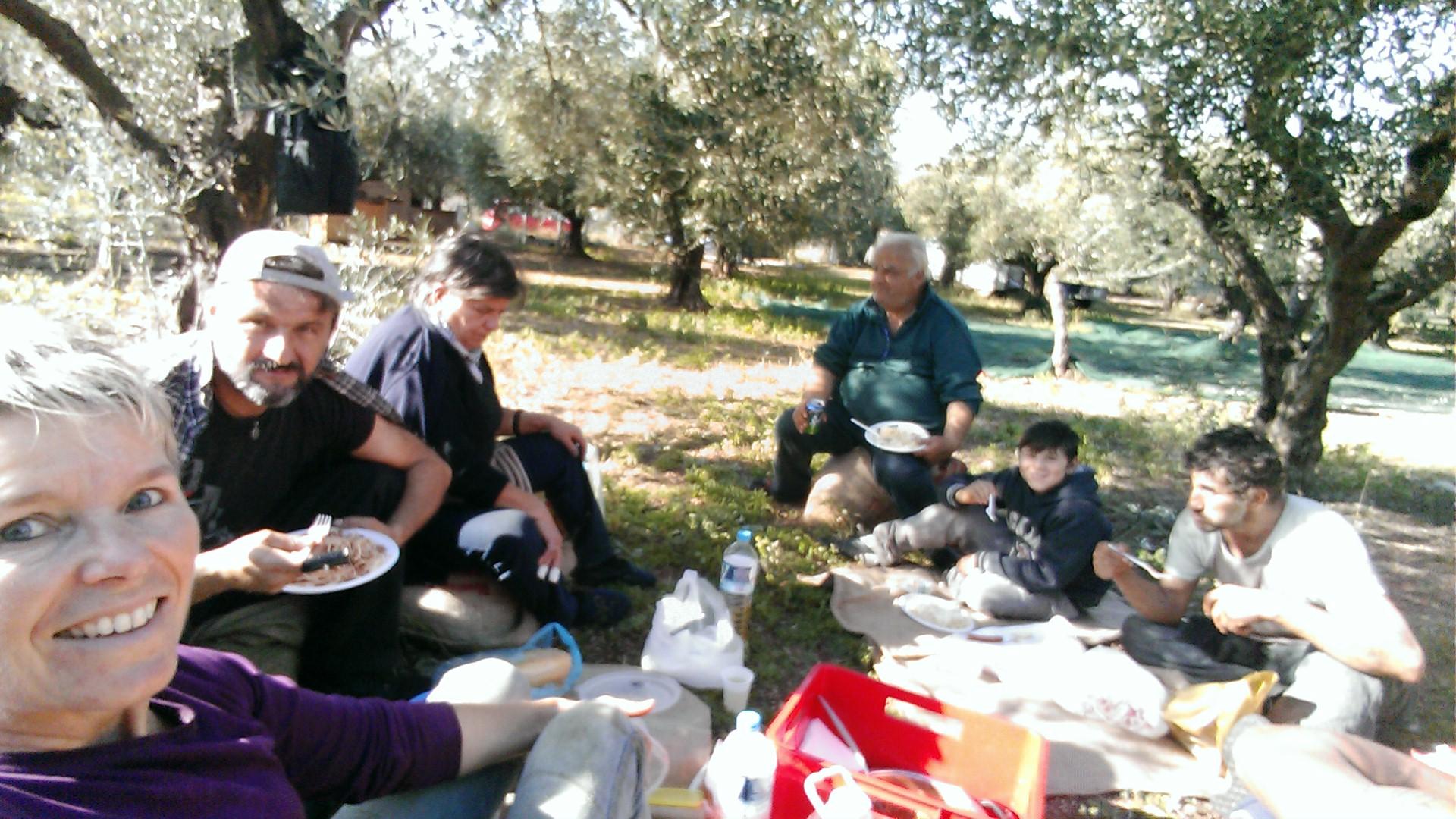 Olivenernte bei Armenos