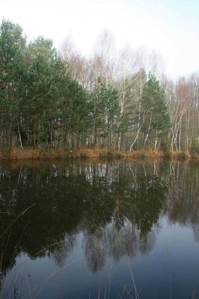 Reflets dans l'étang