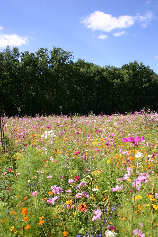Field of flowers for the bees