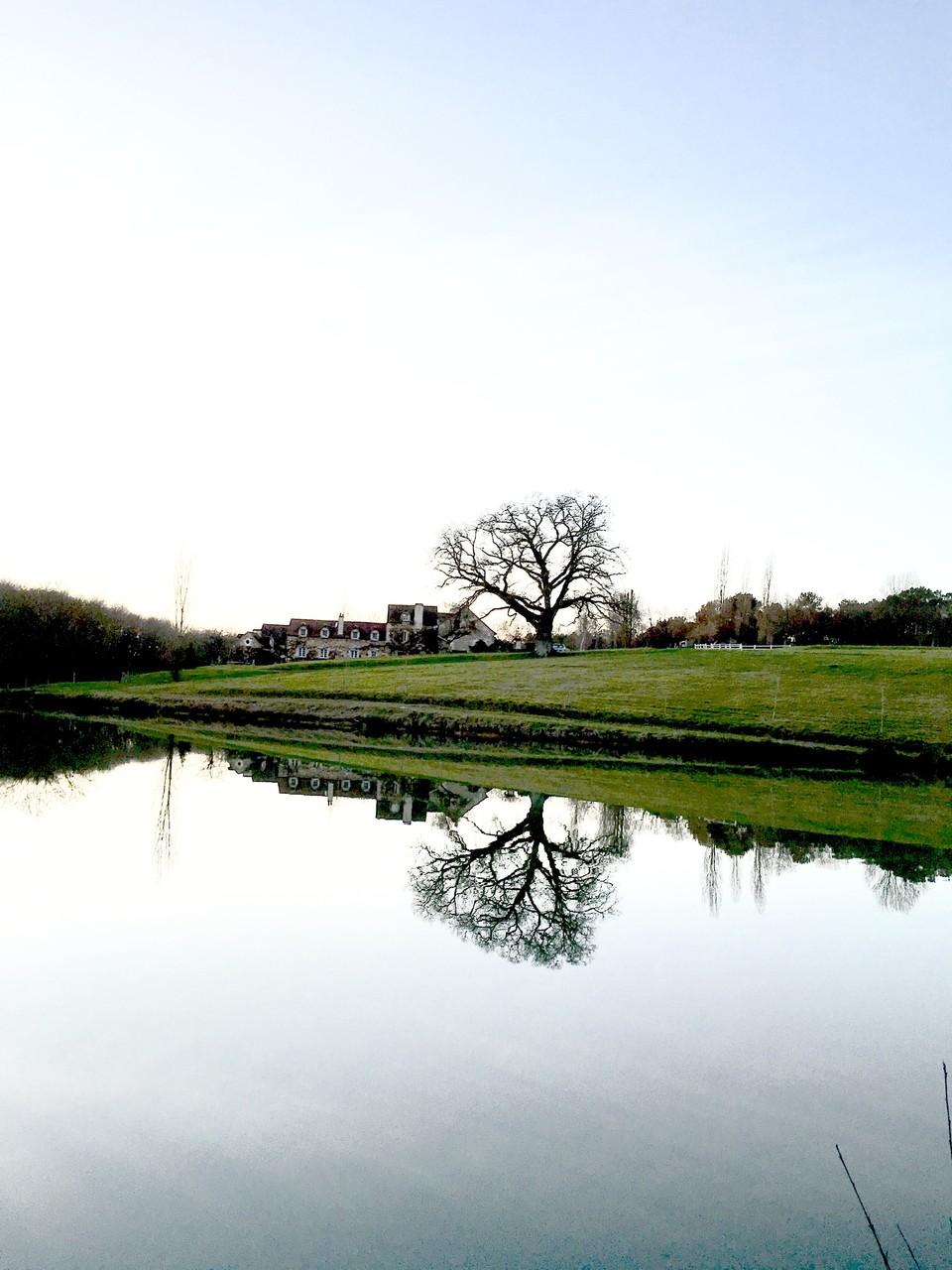 L'étang et le chêne