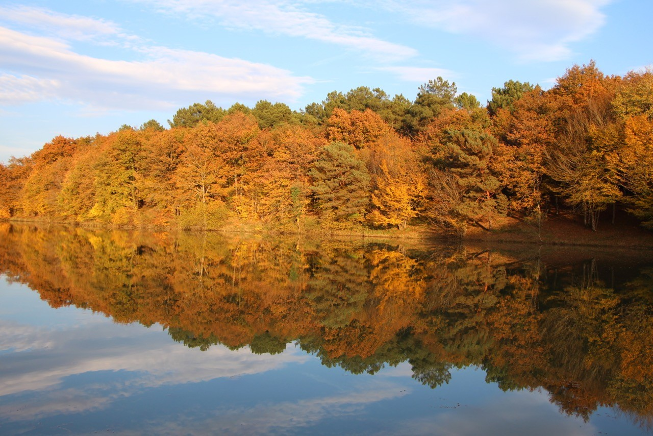Reflets des arbres couleur or