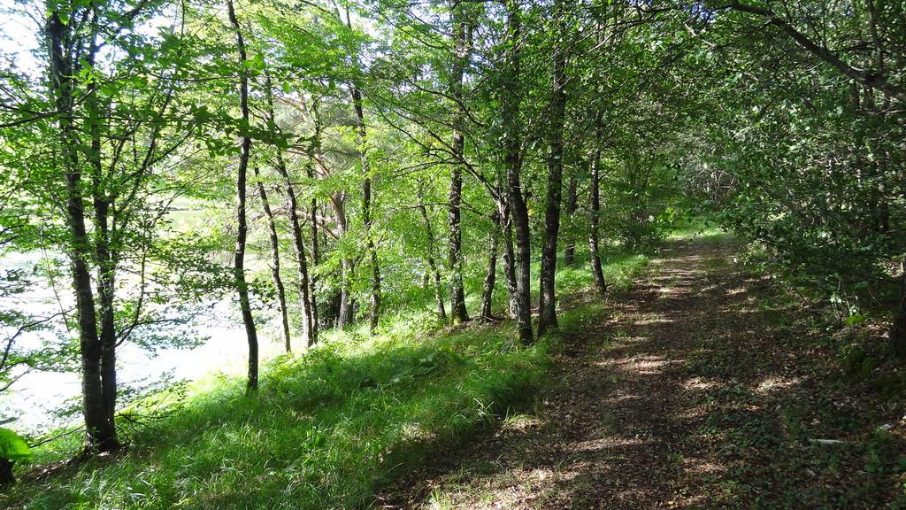 Auf den Waldwegen neben dem See