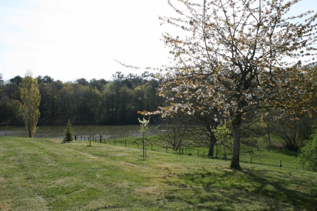 Der Kirschbaum mit Blüten