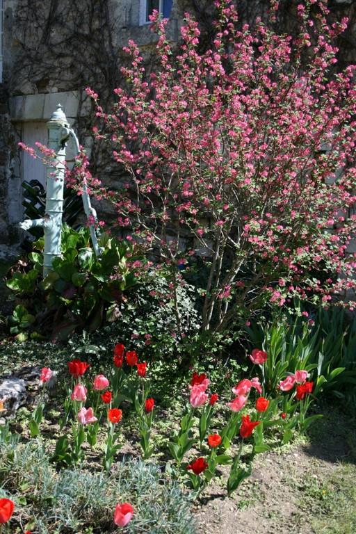 Premières fleurs de printemps