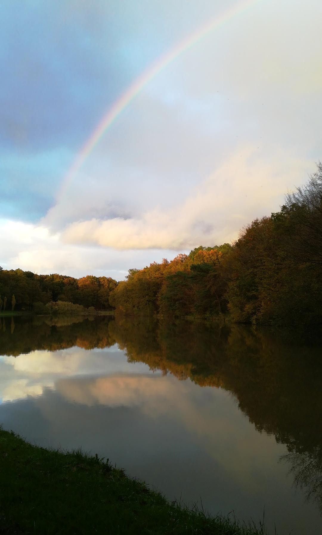Magnifique arc en ciel au-dessus de l'étang et de la forêt