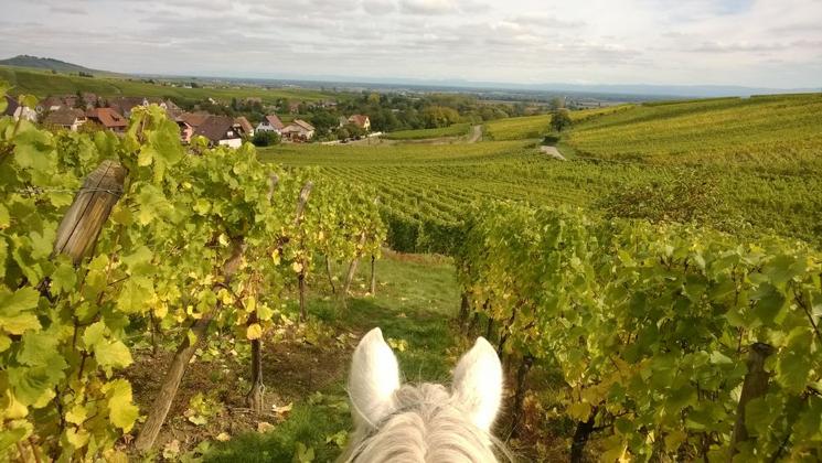«L'air du paradis est celui qui souffle entre les oreilles d'un cheval»