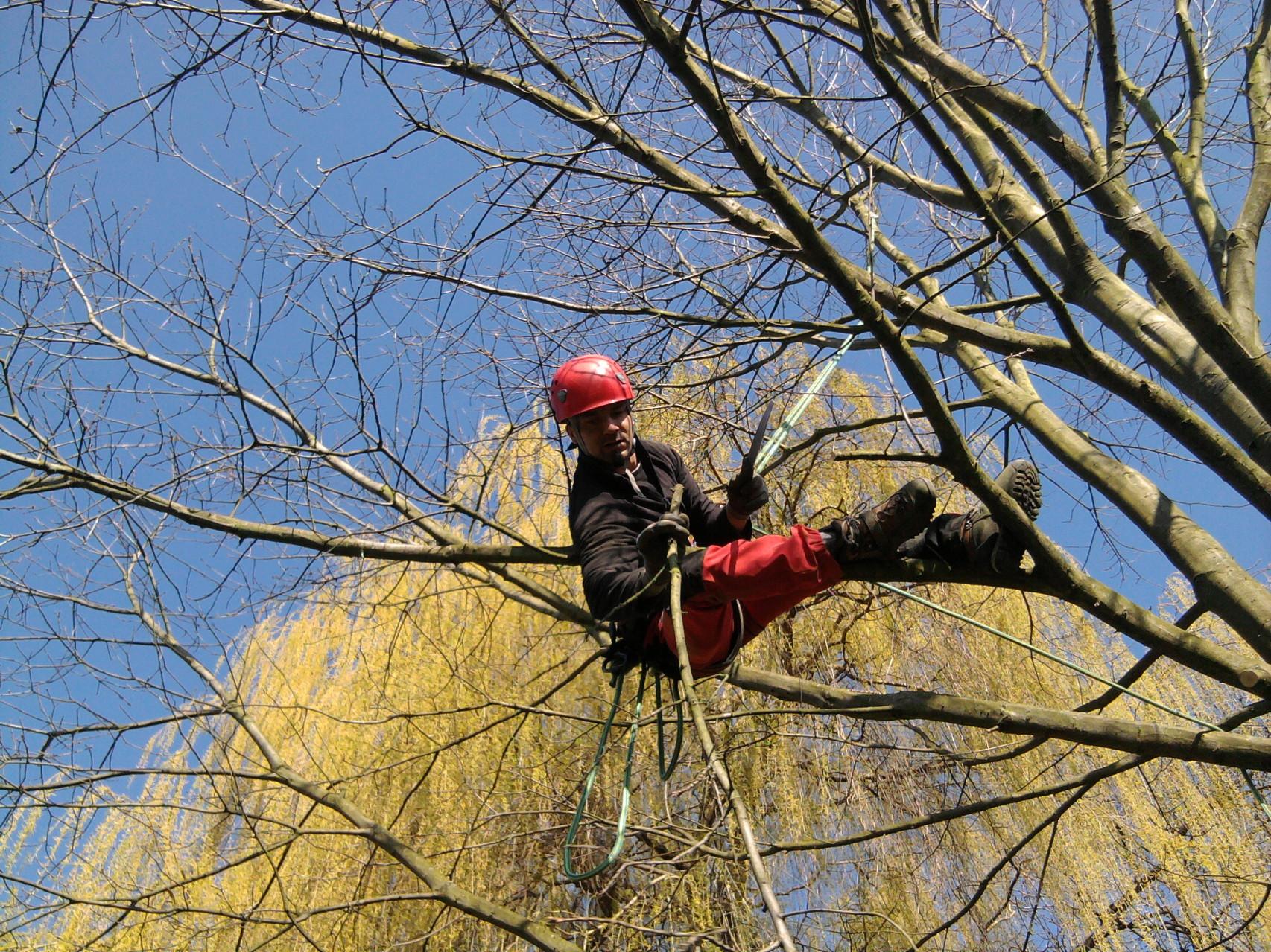 Intégrer l'arbre dans son environnement tout en respectant son développement