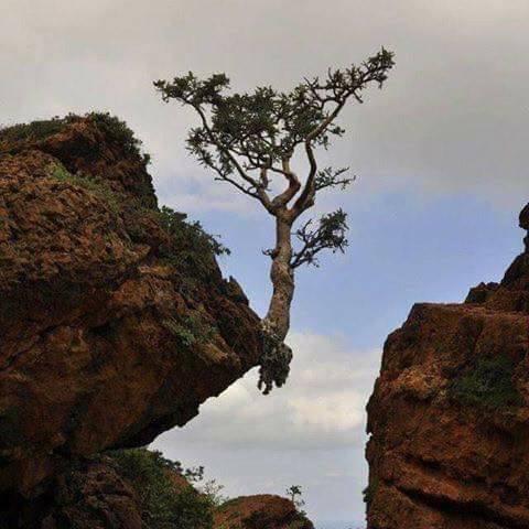 L'arbre est en équilibre précaire dans notre société, faites appel à un arboriste qualifié.