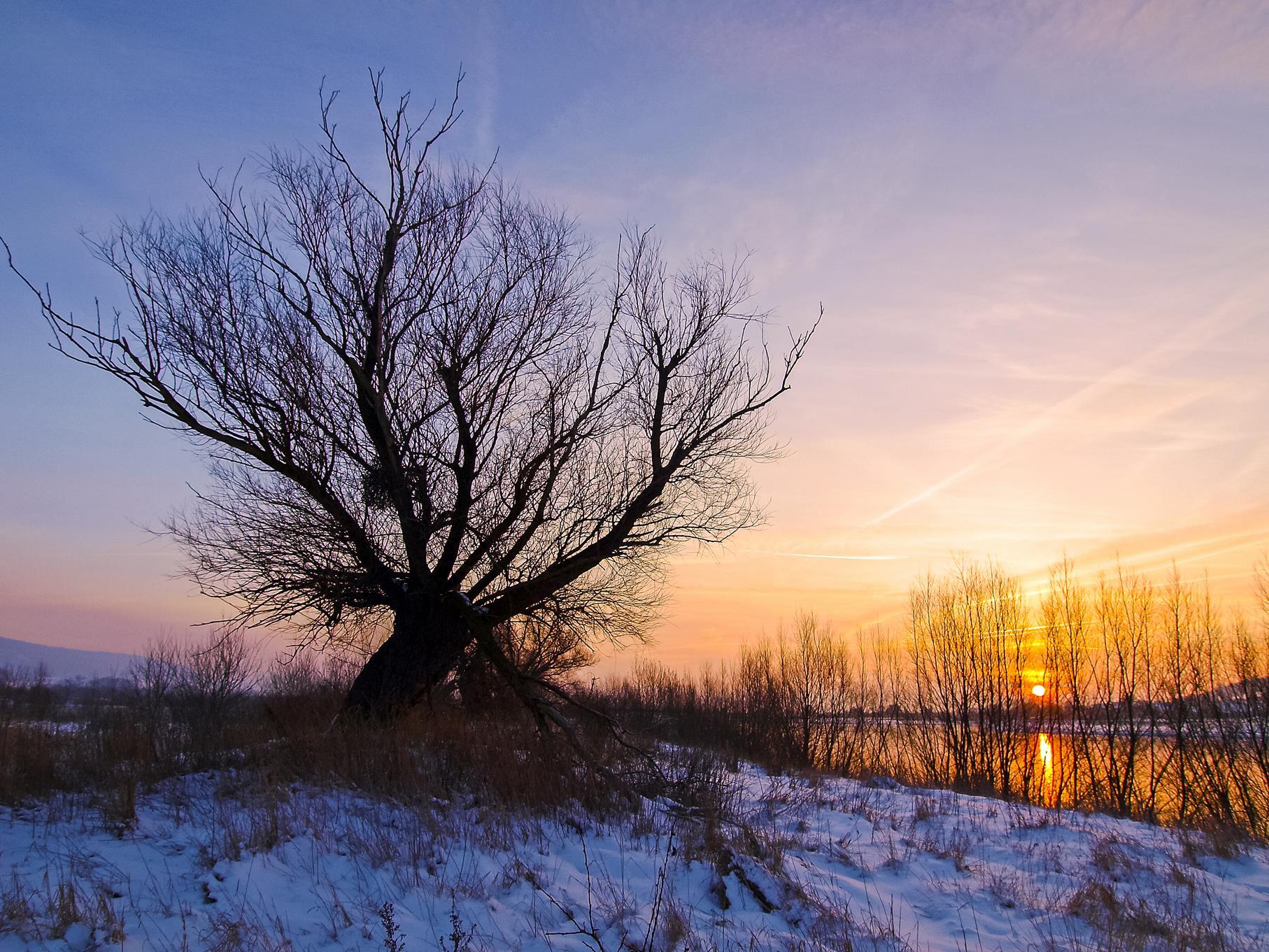 Kopfweide in der Auenlandschaft bei Sonnenaufgang.