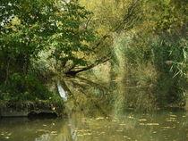 Eberner Wehr Wasser Fluss grün