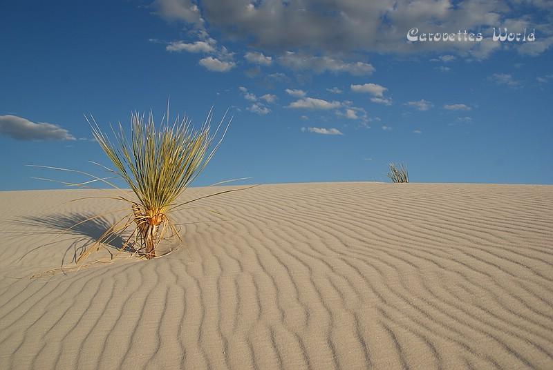 in der Golden Hour wird der schneeweisse Sand langsam goldfarben...