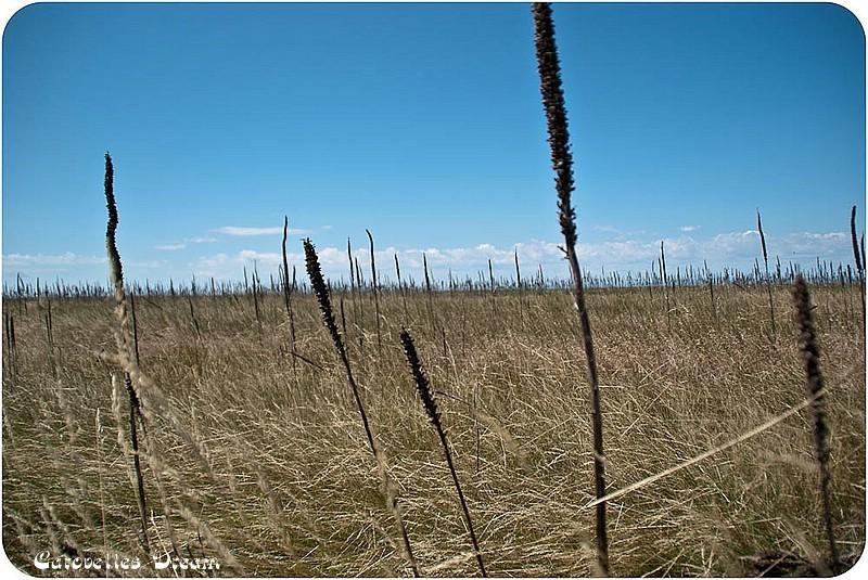 """""""singendes"""" Gras"""