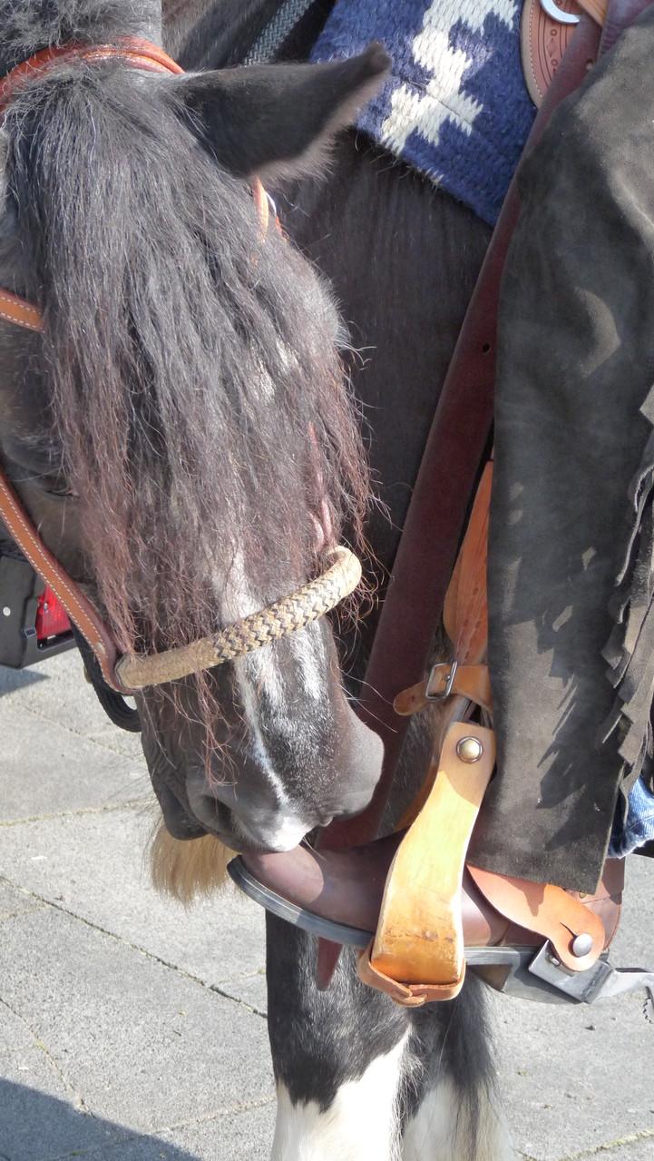 Cowbosy And Horses! Na? Sind Deine Tanzstiefel auch geputzt???