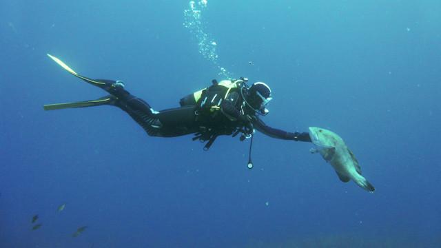 Mérou et plongeur