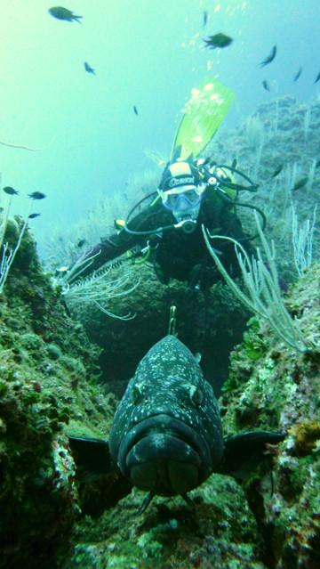 Gros mérou et plongeur