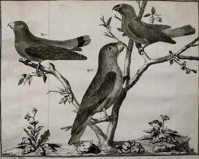 Trois oiseaux dessinés au crayon perchés sur des branchez d'un arbre dépouillé