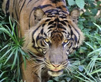 Rêve : Le livre de la Jungle