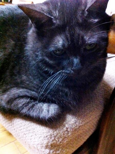 我が家の「でぶ猫のレオ」