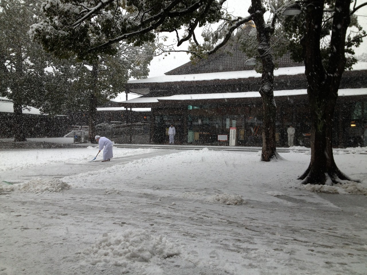 At 明治神宮 (Meiji Shrine).