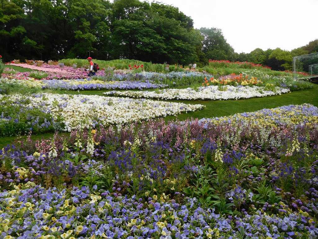 横浜の花で彩どられた大第花壇