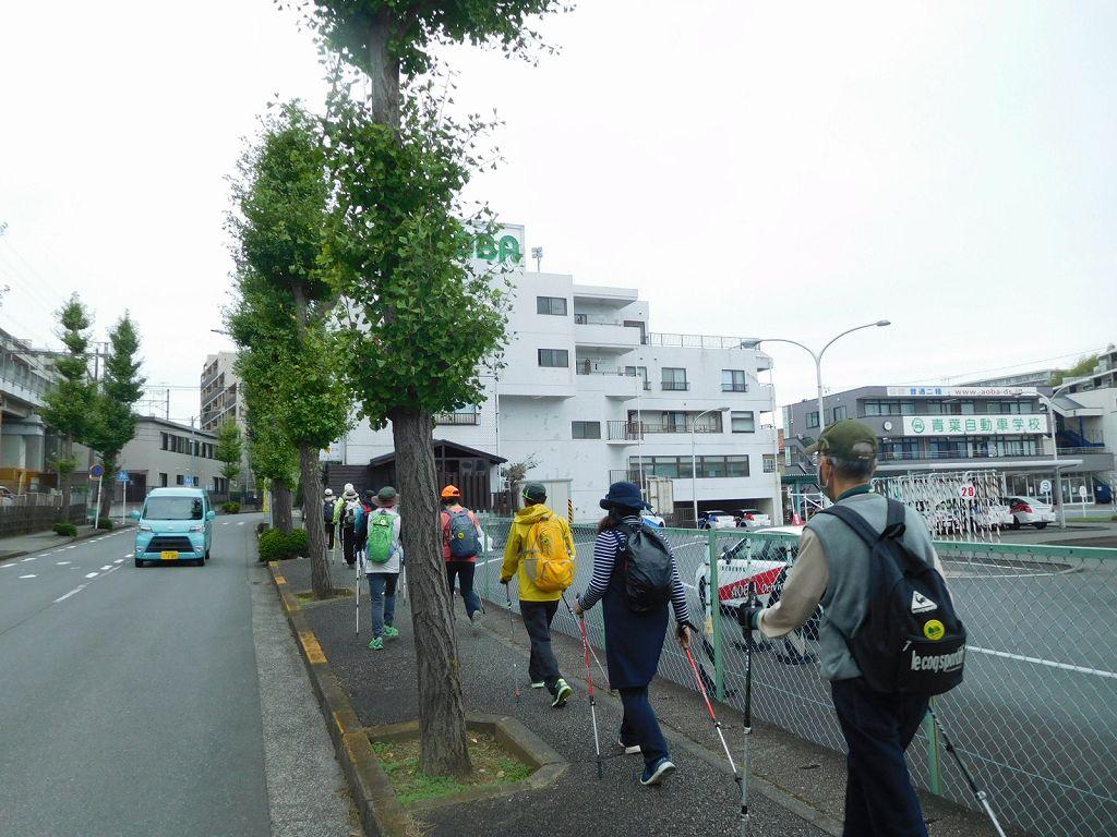 市ヶ尾の銀杏並木を歩いてます ギンナンはまだのようです