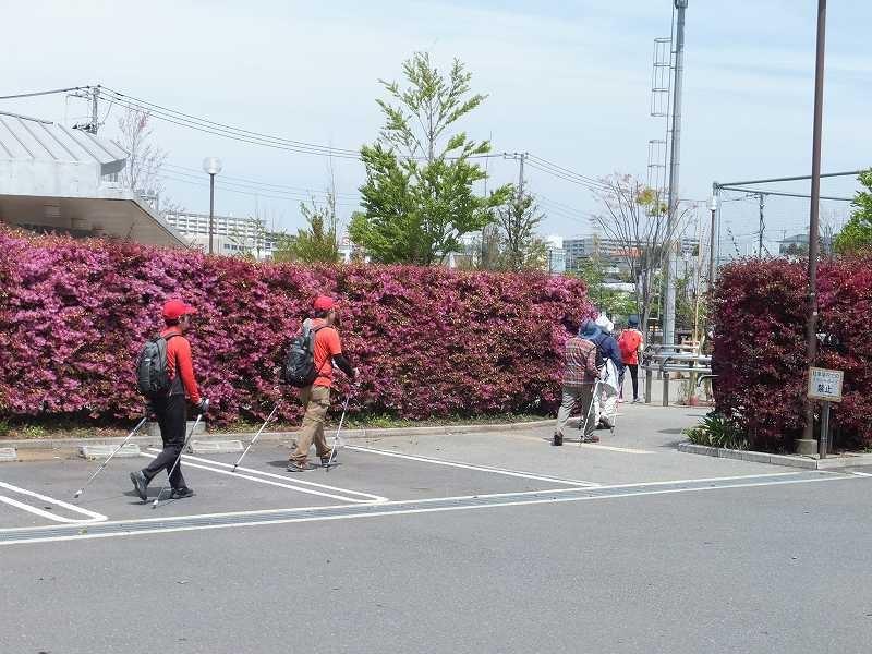 谷本公園の横は真赤な「マンサク」の垣根で綺麗!!