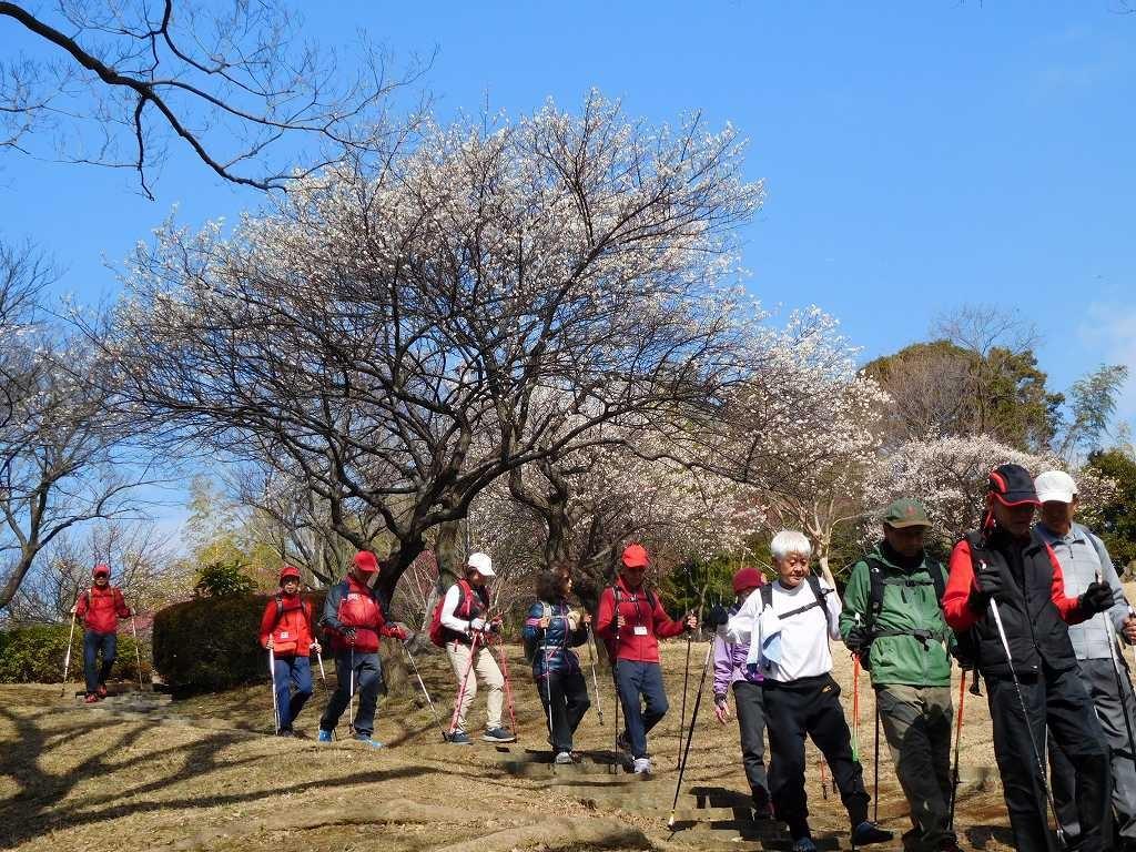 折田不動公園の梅をバツクに下山