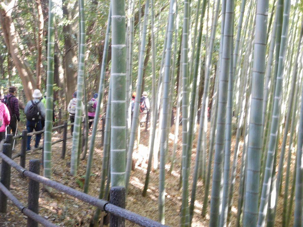 竹林は手入れが行き届いています