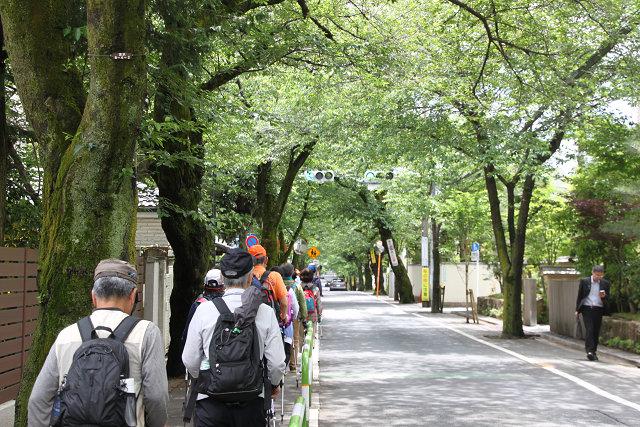 高級住宅街の桜並木をウォーキング 桜の時期は綺麗だろうな~