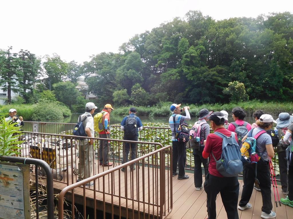 もえぎ野公園では睡蓮が咲いてましたが水鳥「バン」の姿は無し