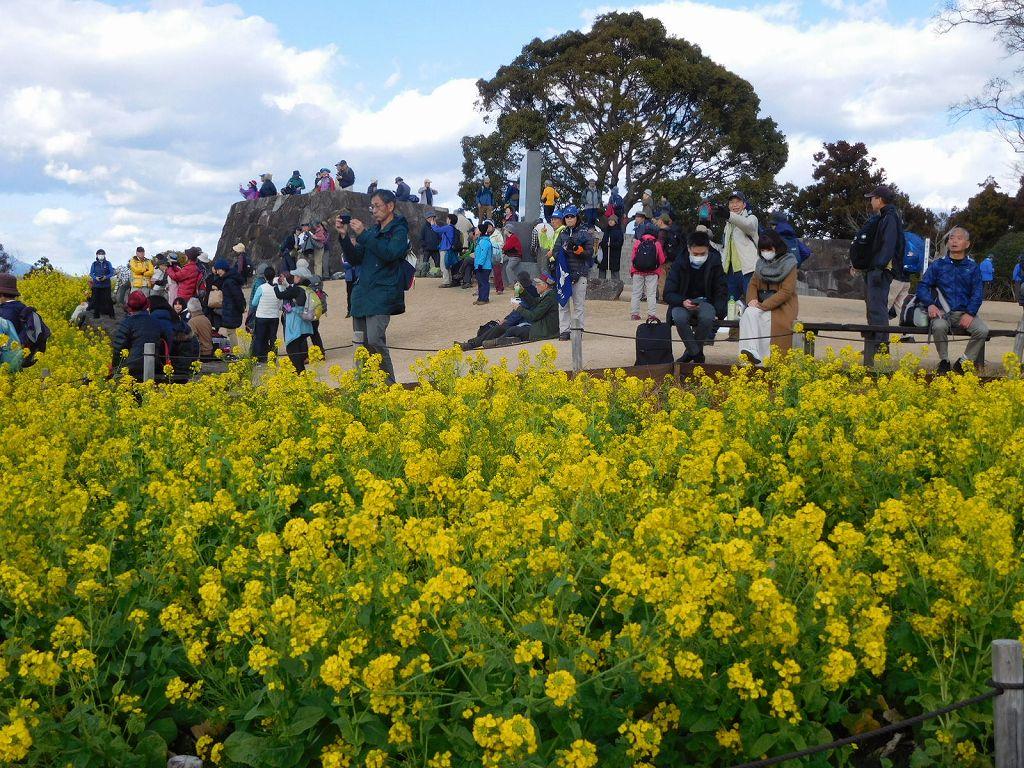 富士山と菜の花を見にきた多くの人々