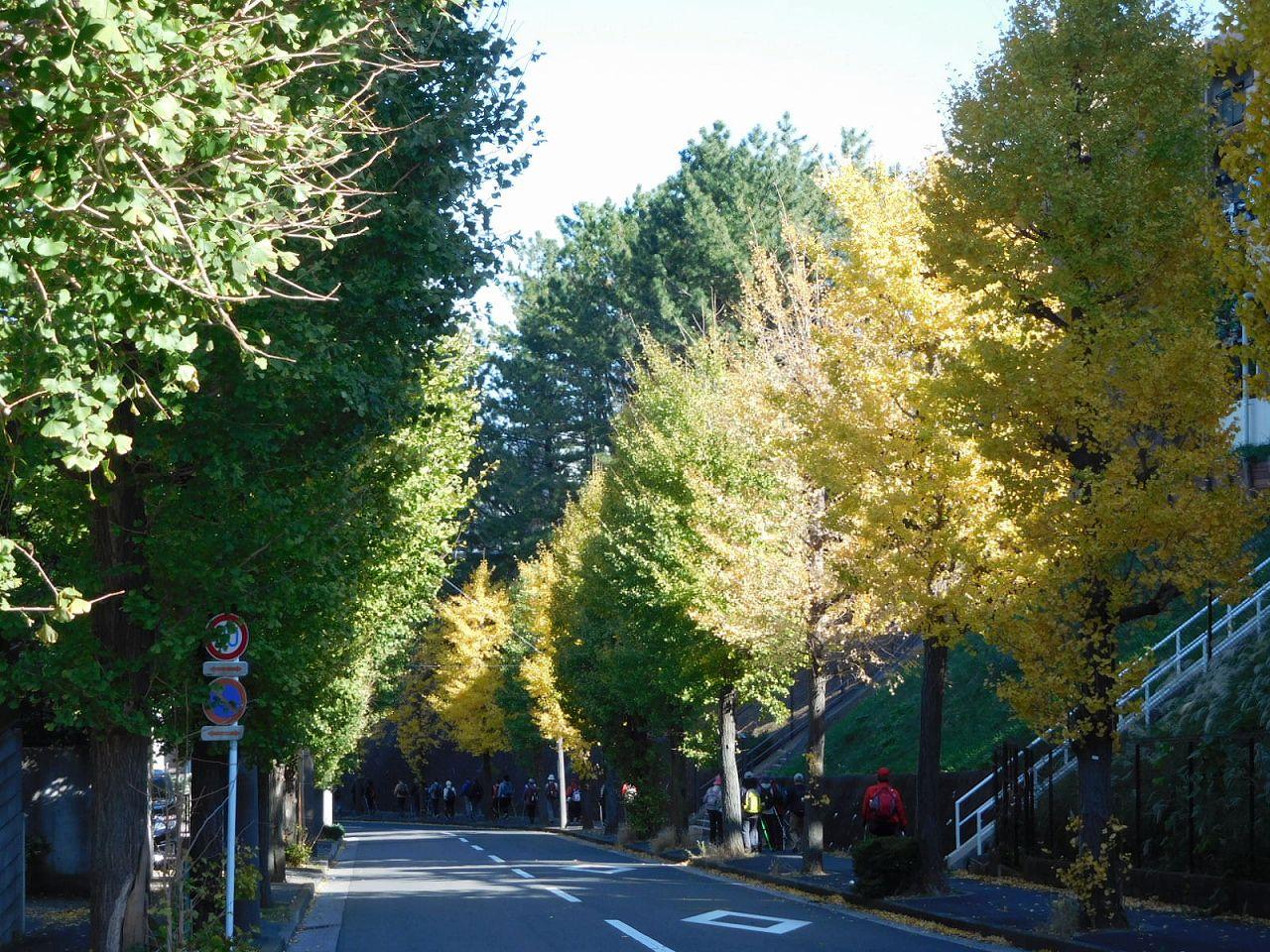 黄葉した木・未だ青々とした木 こんなにも違います