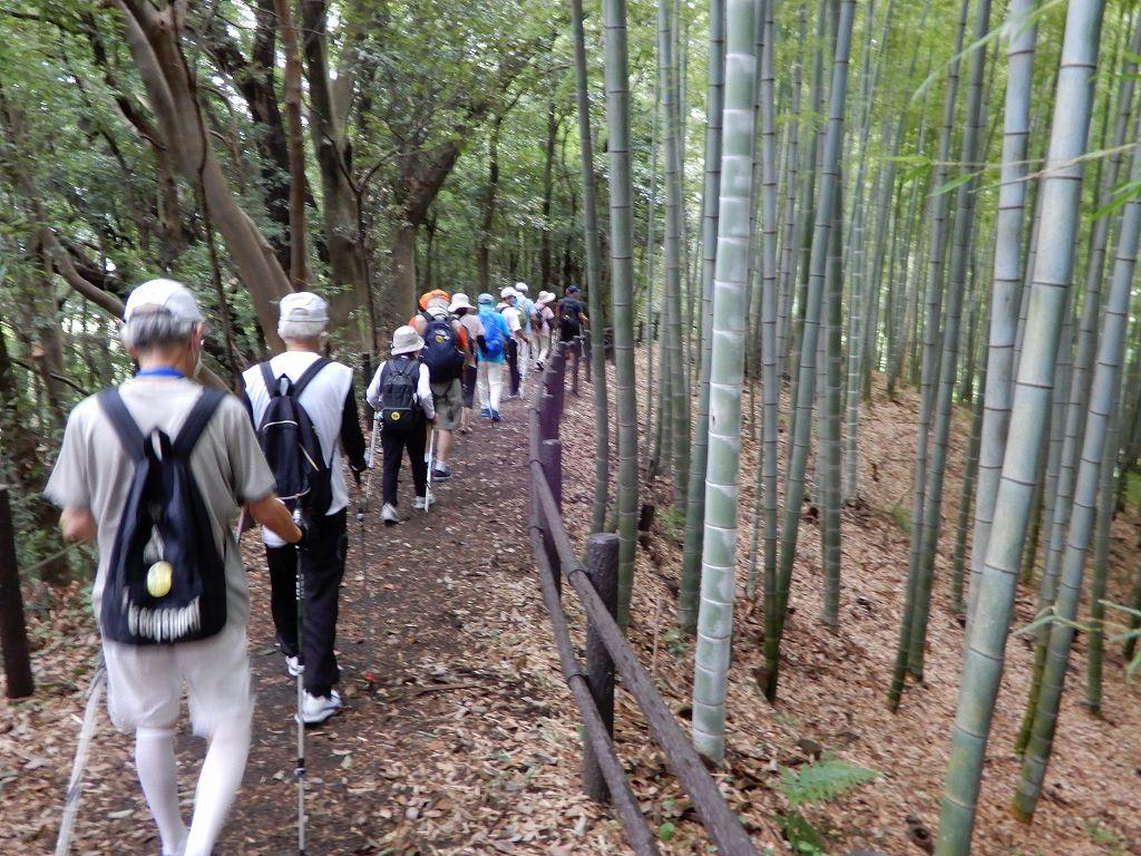 本当に手入れの行き届いた見事な竹林です