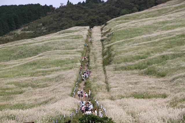 仙石原すすき高原 全貌は広大過ぎて撮れません