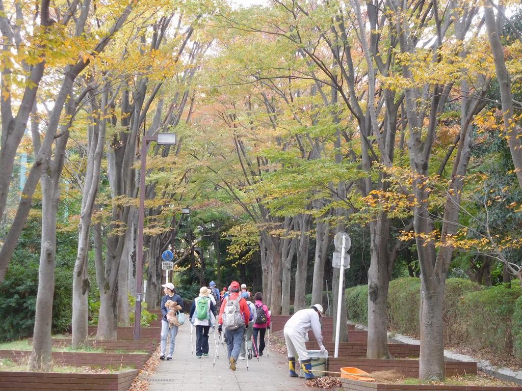 荏田南小学校・中学校裏の遊歩道の黄葉もやや寂しい感じですね