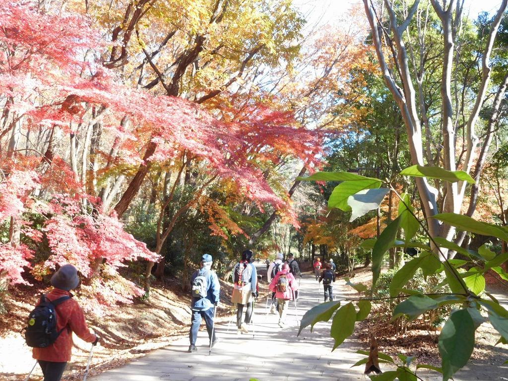 ささぶねの道 紅葉を愛でながらウォーキング