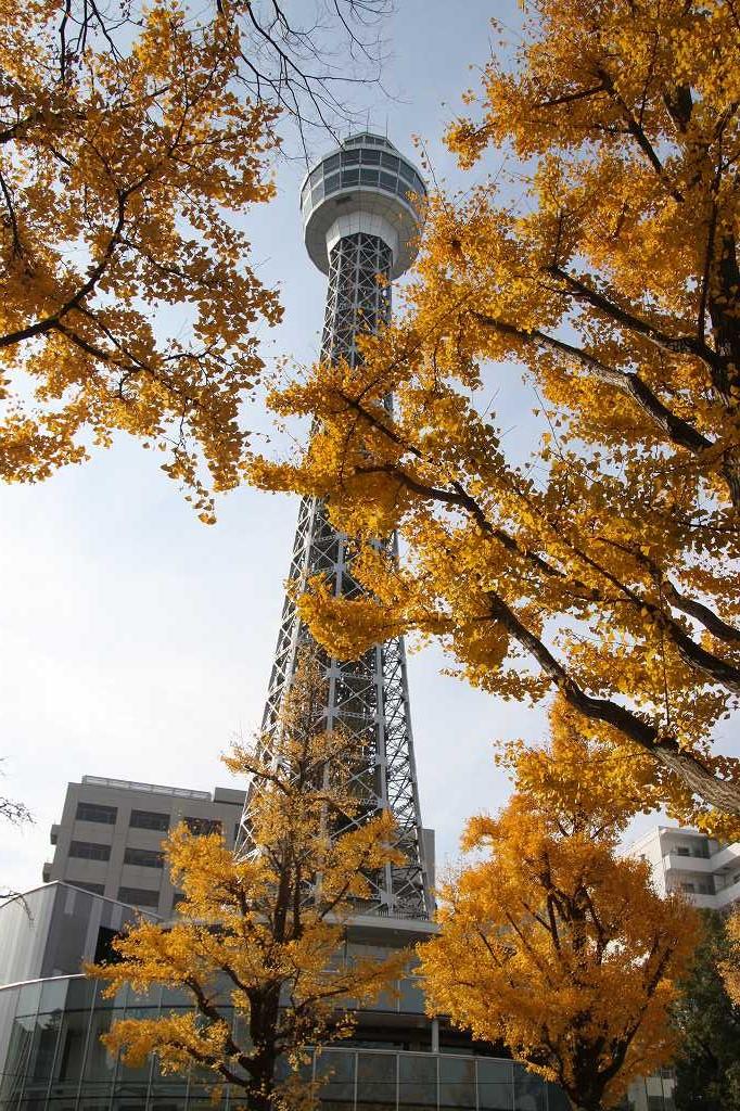 マリンタワーと黄葉