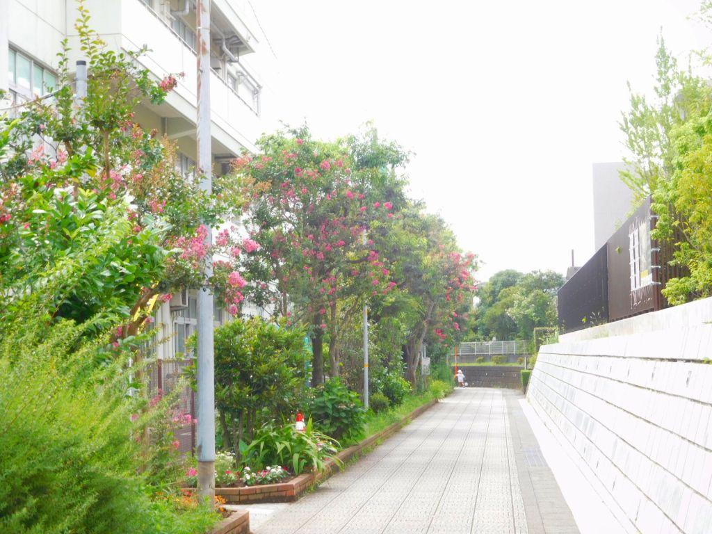 荏田西小学校横の百日紅が綺麗です
