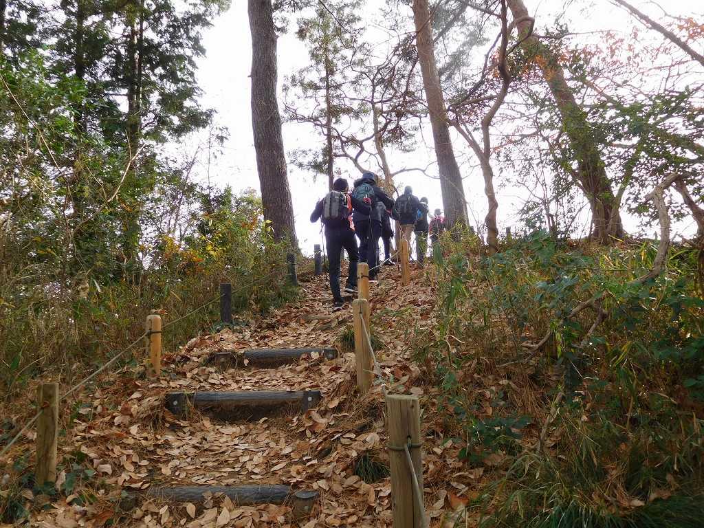 青葉台公園の散策路をウォーキング 落葉が多いので注意が必要