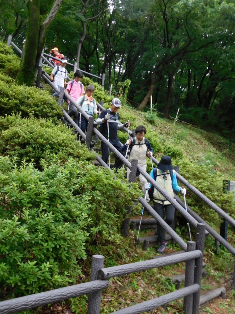 田村草・カクトラノオ・蛍袋等を愛でて急階段を慎重に下ります