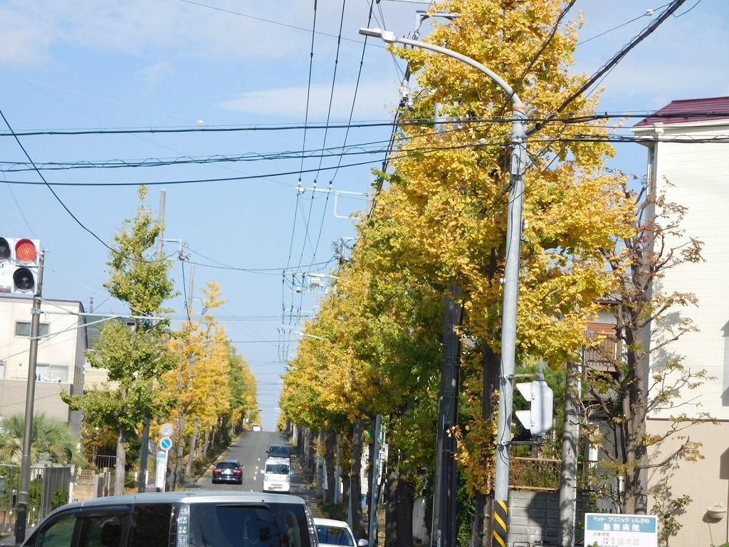 黄葉した街路樹
